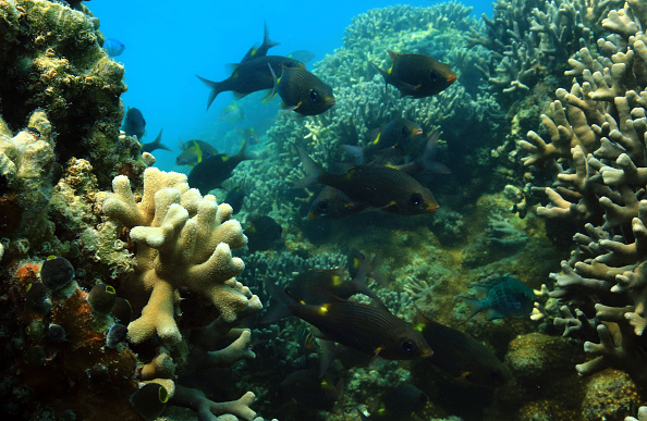 Coral reefs in sanctuary show signs of revival : Science/Health : AsiaStarz